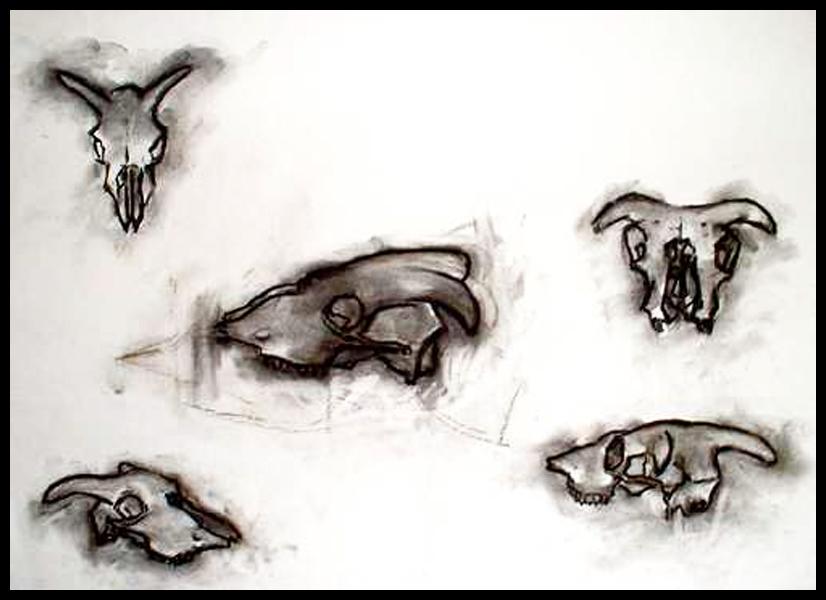 Studies of a Sheep's Skull.